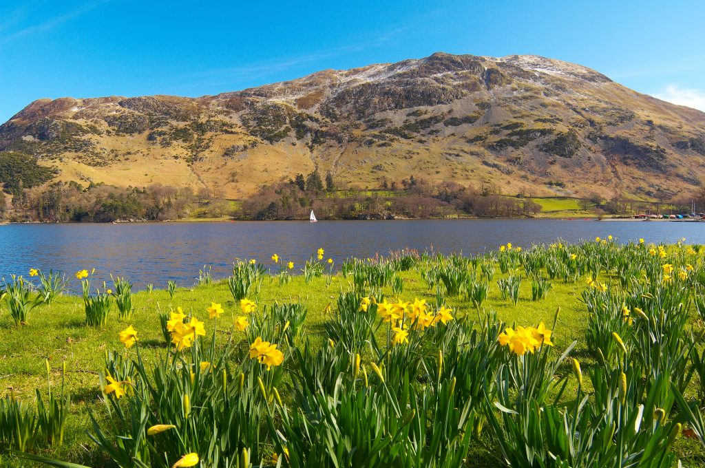 Daffodils by ullswater